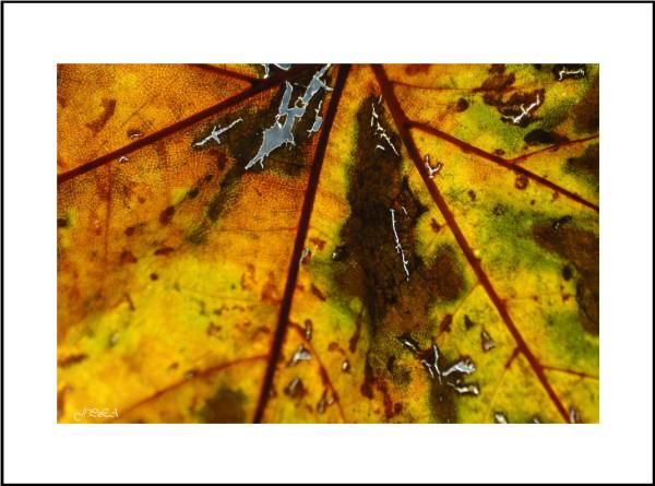 Teintes d'automne #12