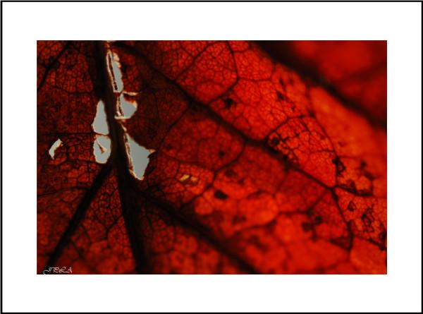 Interlude d'automne #8