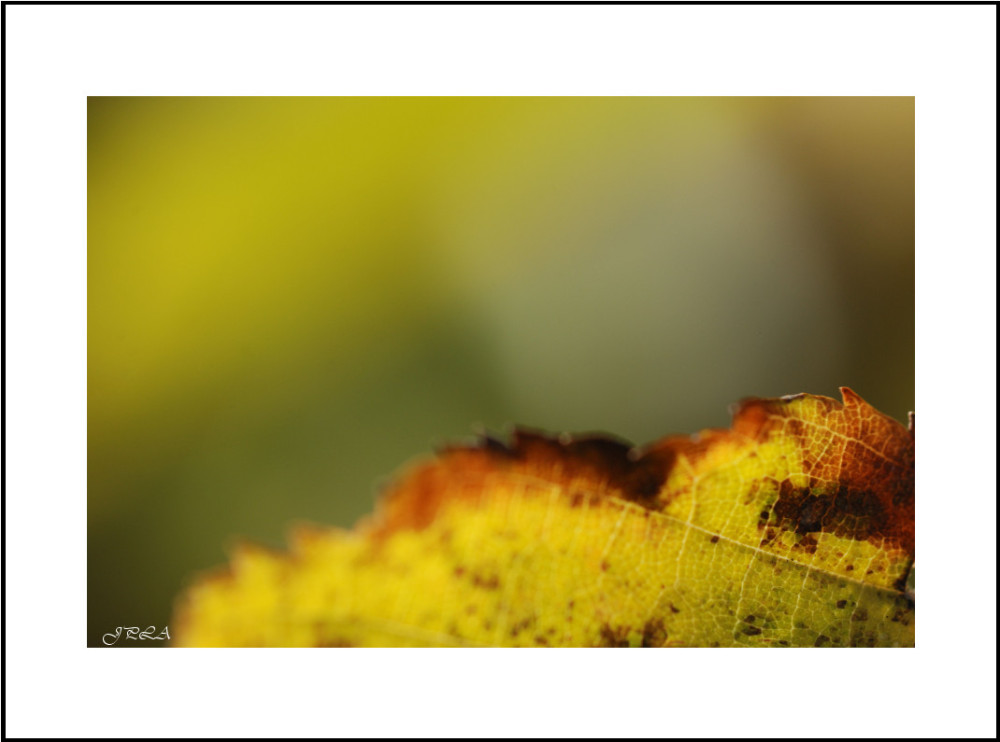 Interlude d'automne #9