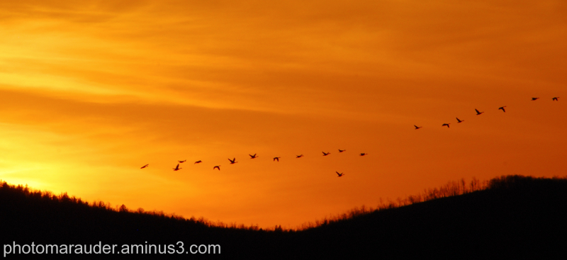 Geese over the Kennebec River