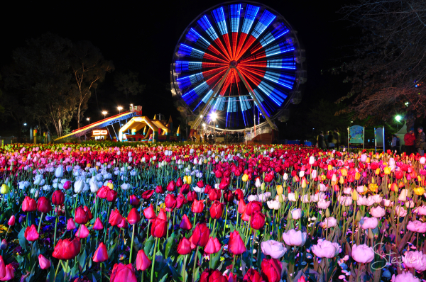 View of the ferris wheel at Floriade's NightFest