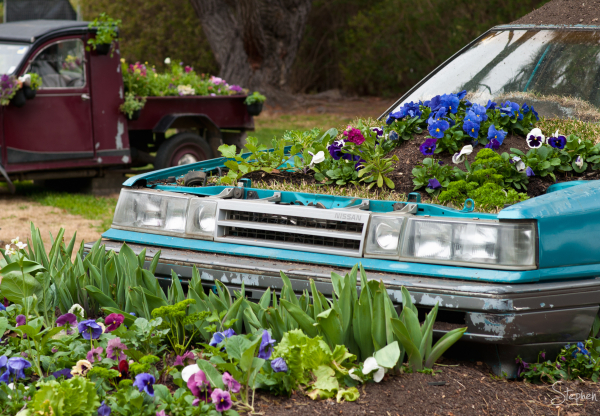 Old cars spring to life with flowers at Floriade