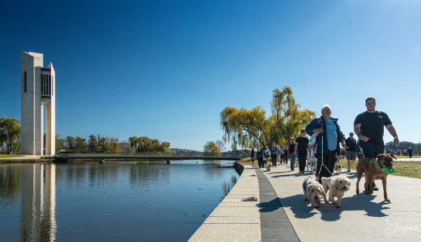 Million Paws Walk around Lake Burley Griffin