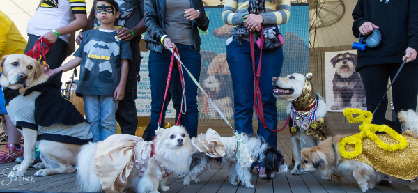 Best dressed dog competition at Million Paws Walk