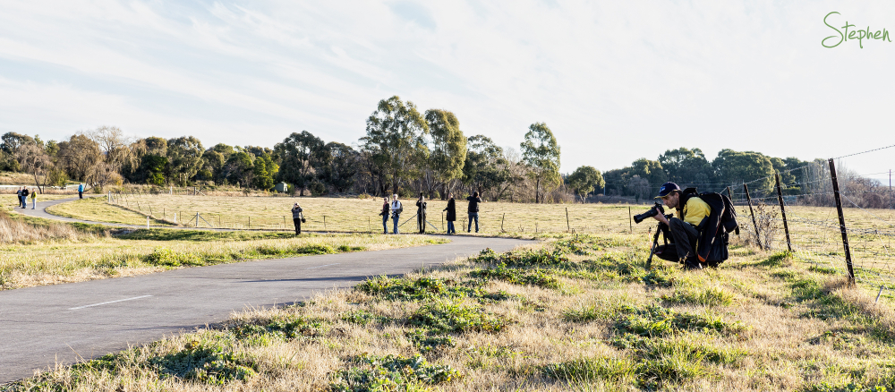 Photowalk in Jerrabomberra Wetlands