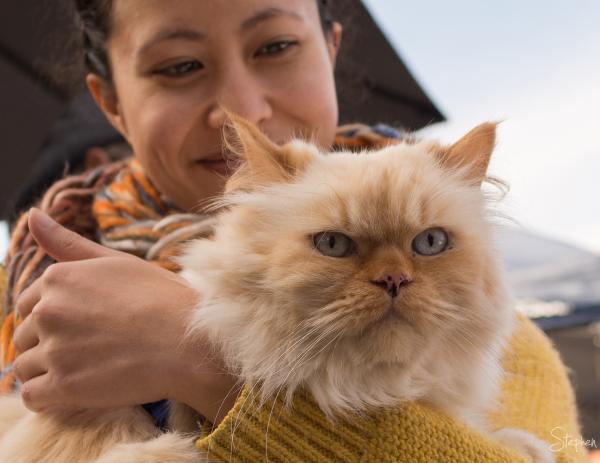 Zanda the cat at Westside Acton Park