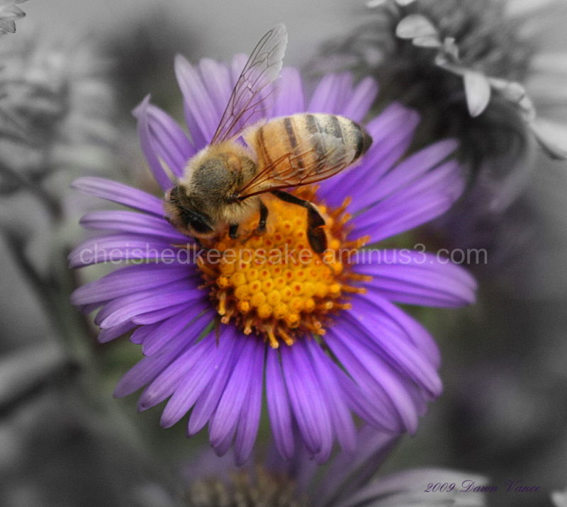 Honeybee