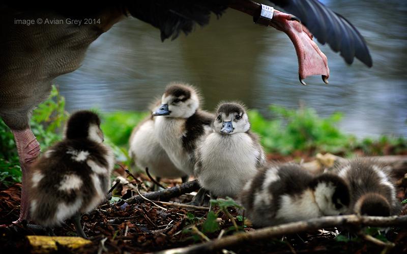 Under Mom's Wing