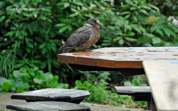 Waiting at Table
