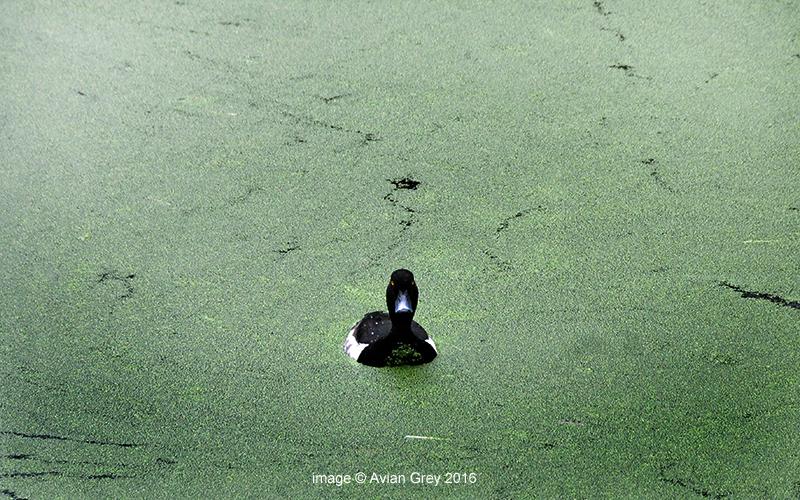 An Algae World . .