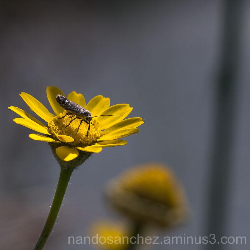 Sobre amarillo