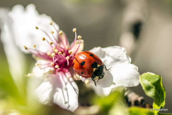 Spring & Ladybirds