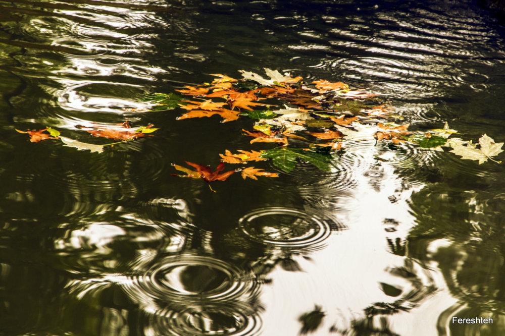 Autumn Whispers lllllll