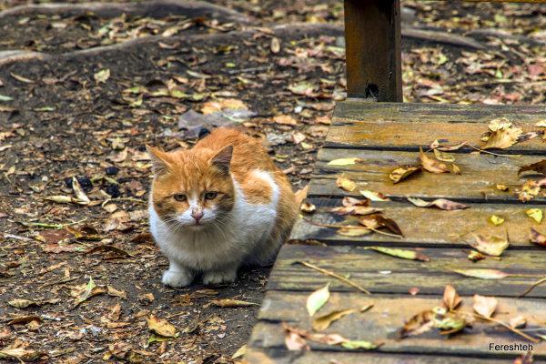 Autumn Whispers llllllll