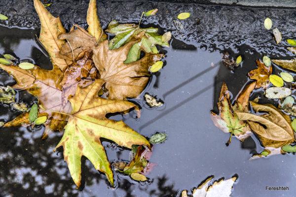 Autumn & Rain lllll