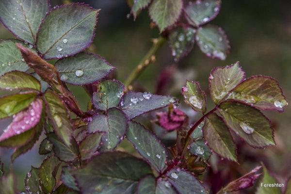 Rain lll