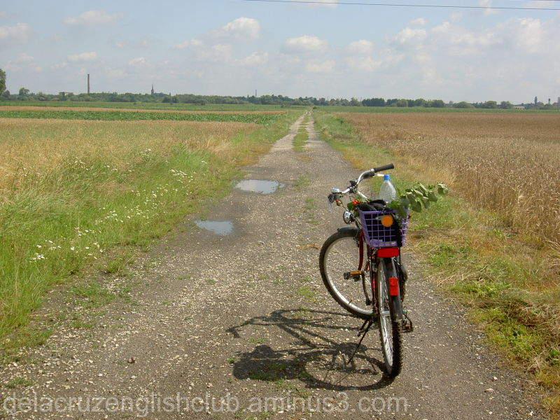 Polish Hokkaido, bicycle, field, recreation