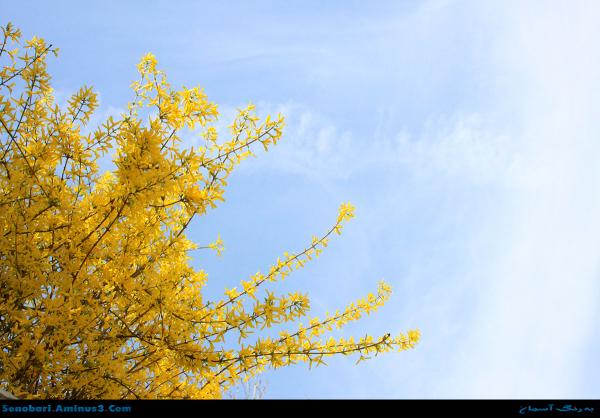 صبح بهار و شکوفه