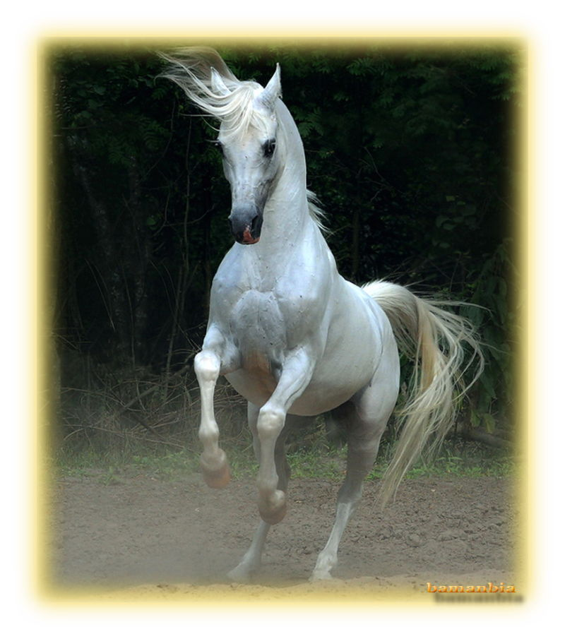 Horse Wishes, rogue, white and beautiful, noble lo