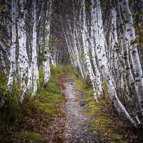 Wet Woodland Walk