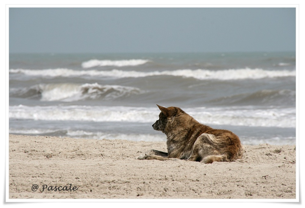 djerba, dog , beach
