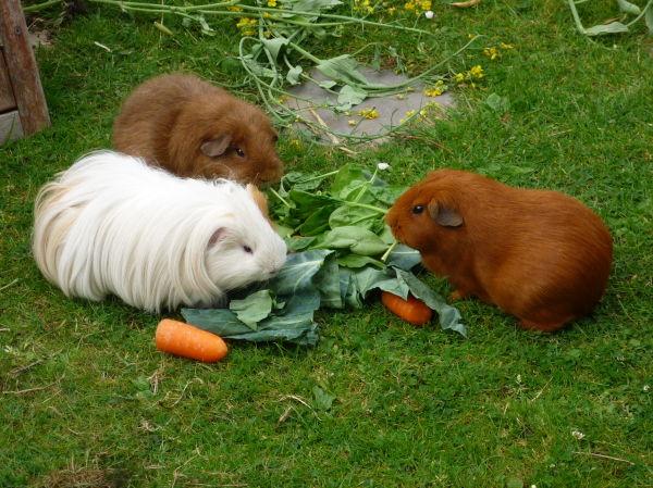 Pigs Breakfast
