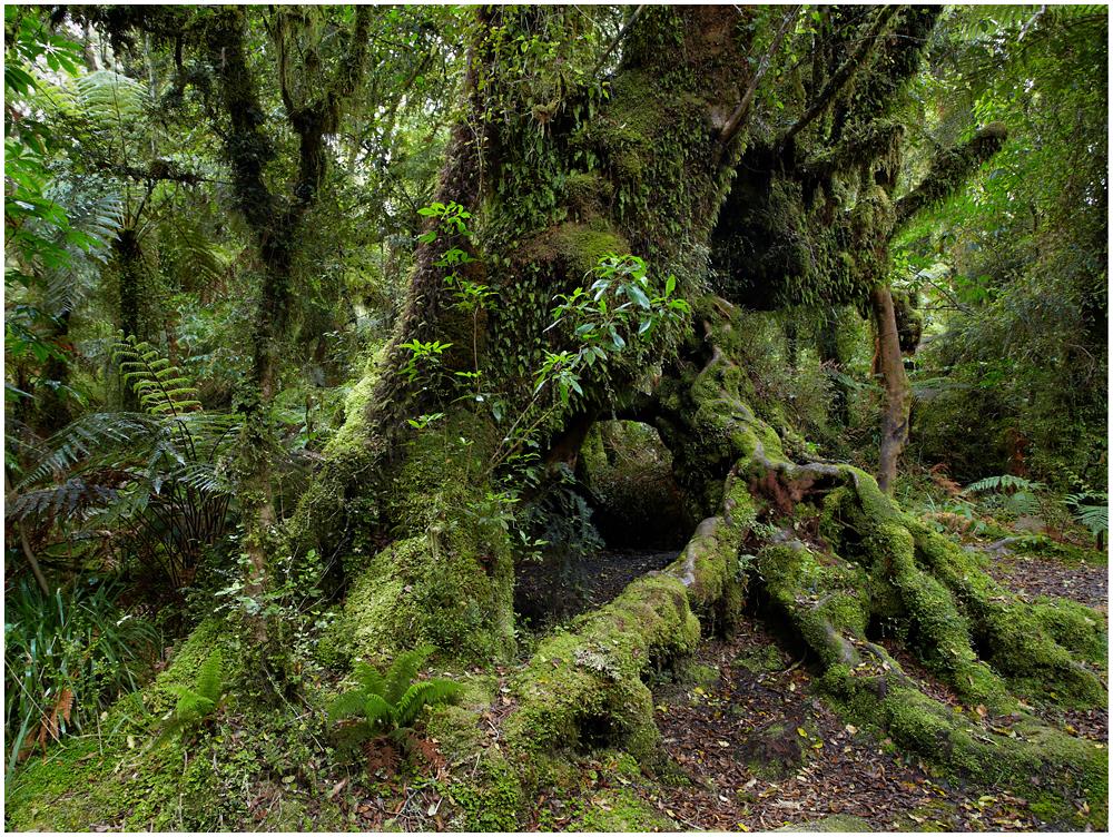 Vihmametsas