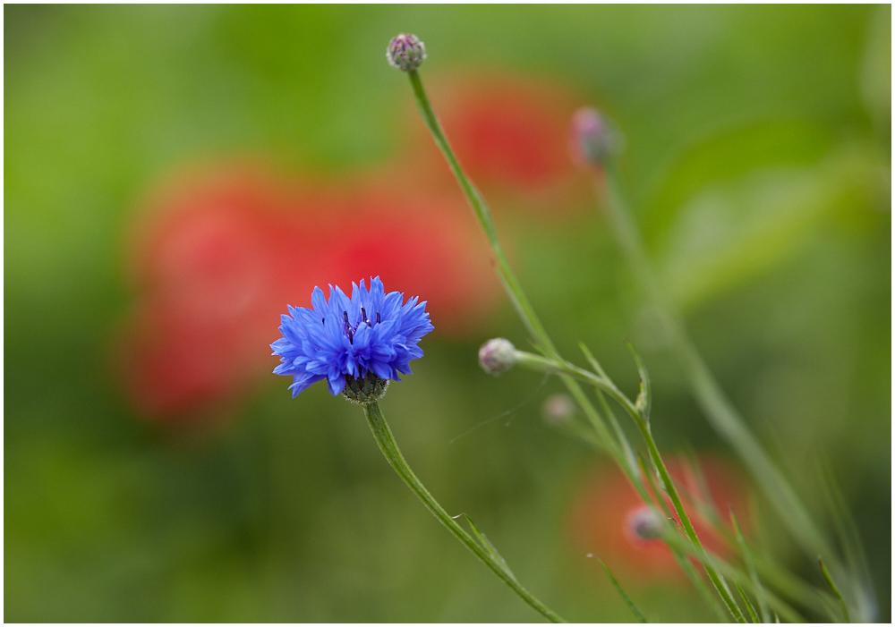 Värviline suvi