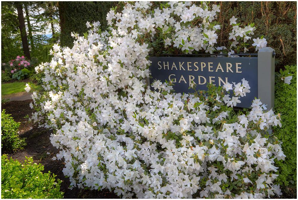 Portland Rose Garden, Oregon, U.S.A.