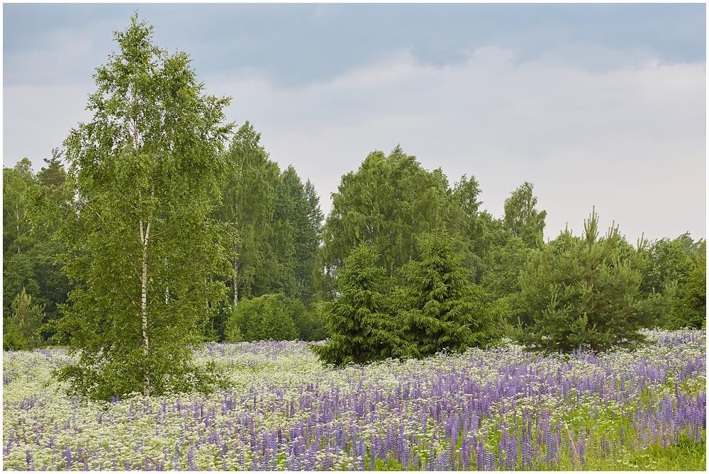 Eestimaa suvine aas