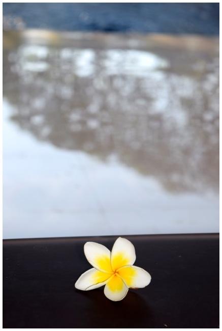 Seminyak Flower