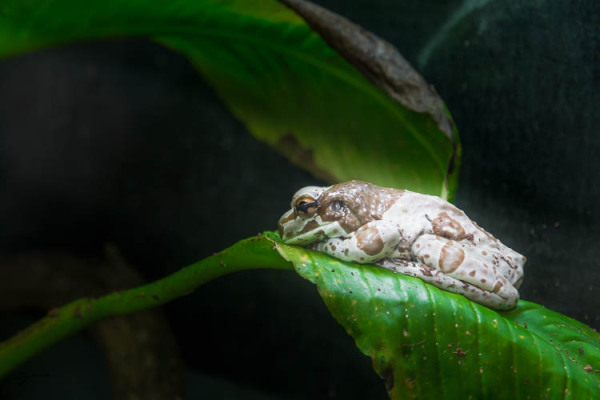 Frog, Aquarium, Aquapark, Istanbule, Turkey