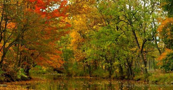 Fall Colors at the Creek