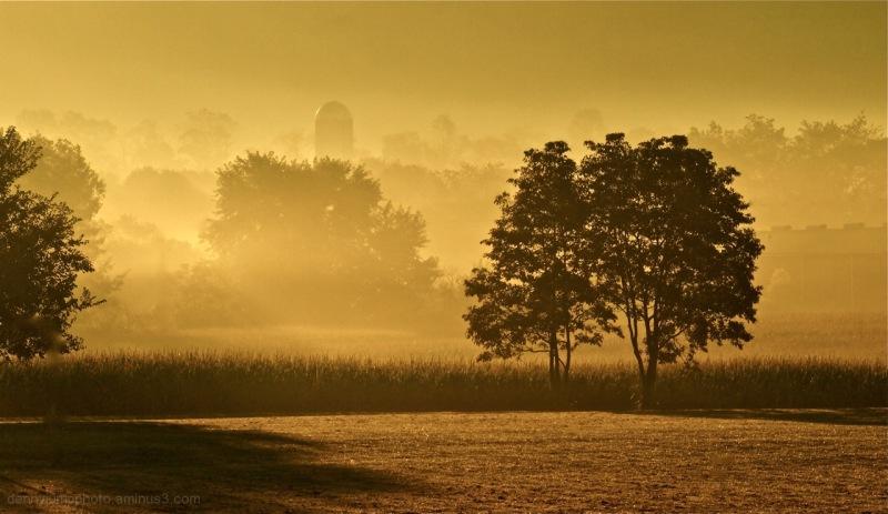 On Golden Farm