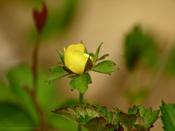 Yellow Jump