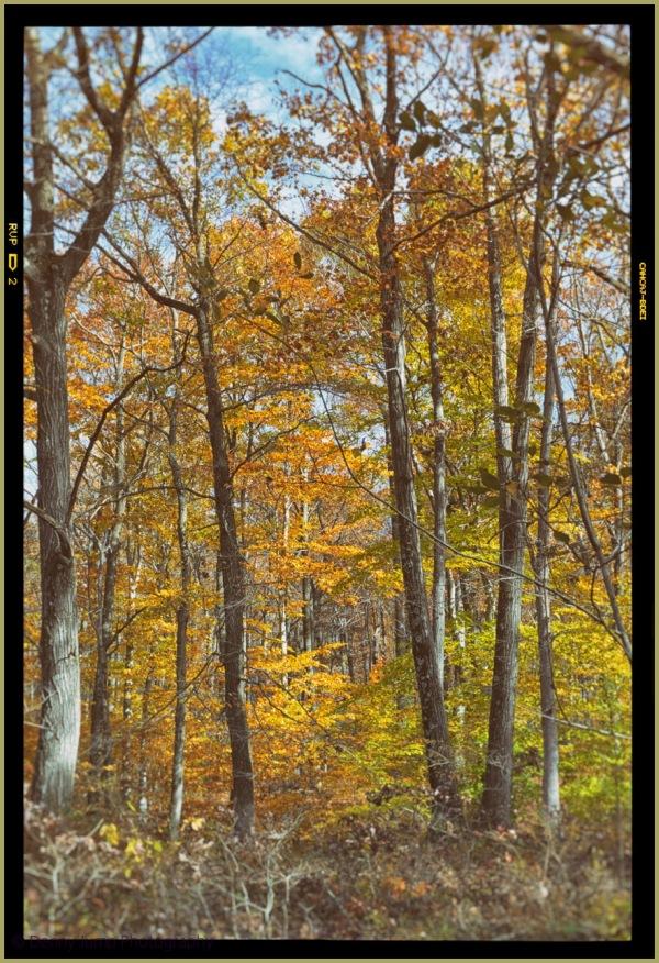 Autumn REM