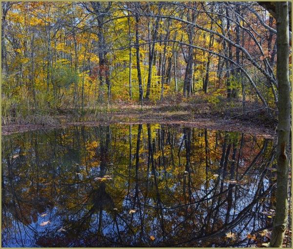 Autumn Passing