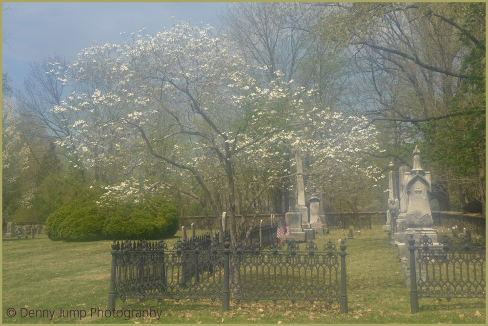 Dogwood in Church Cemetery