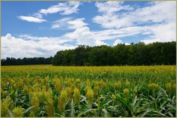 Dwarf Crops au naturel