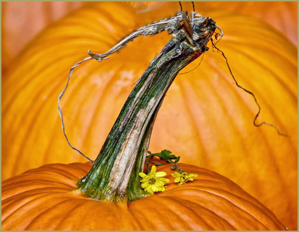 Pumpkins and Stem