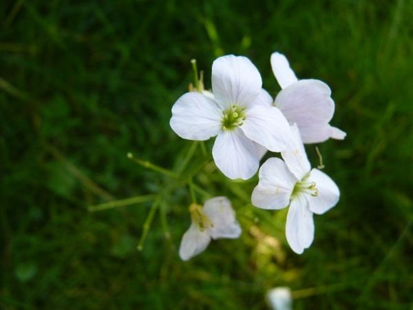 Softness of Flowers
