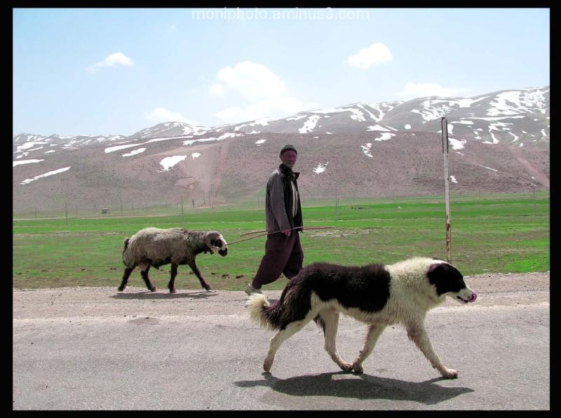 عشایر ، سپیدان