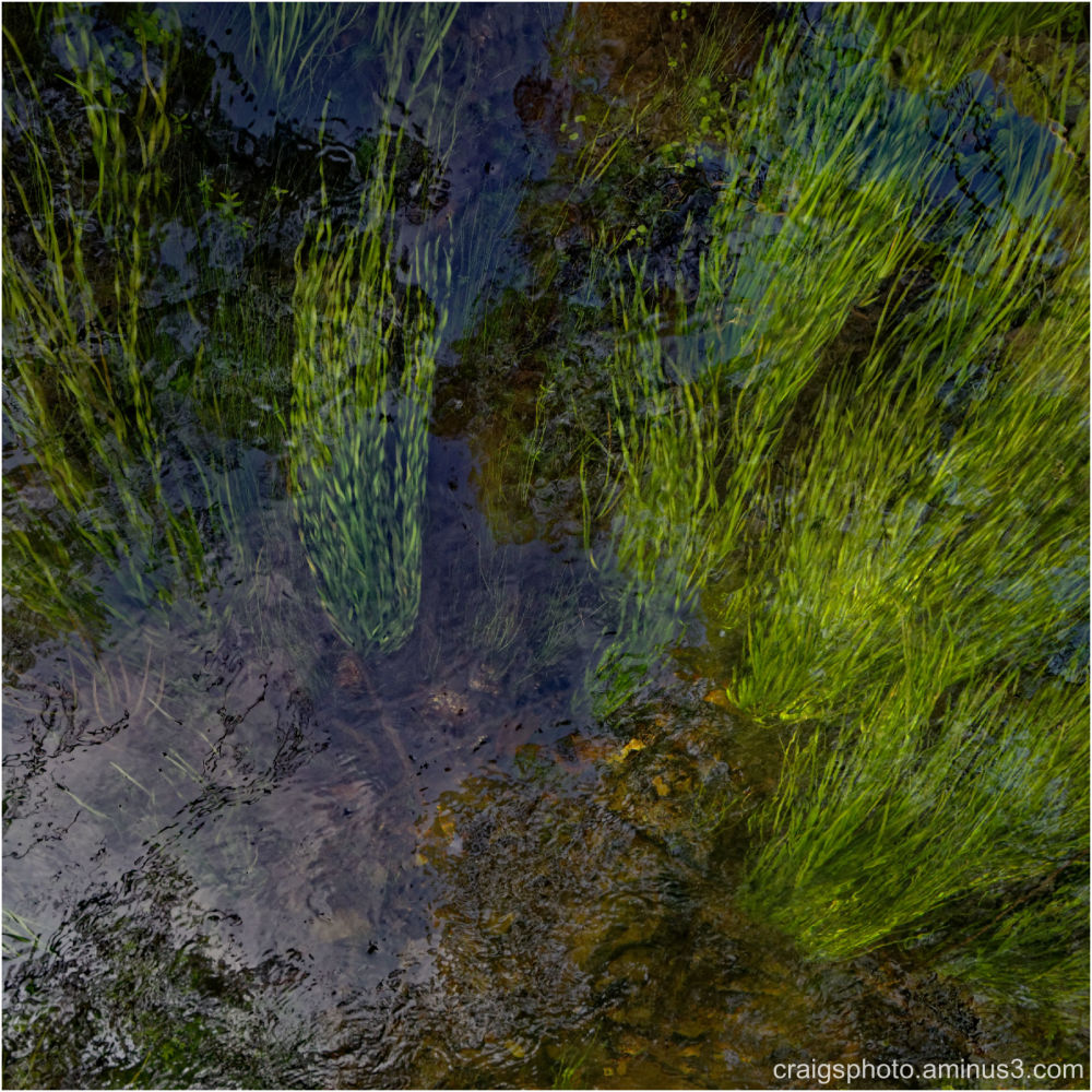 River reeds and grass by Craig White AUS