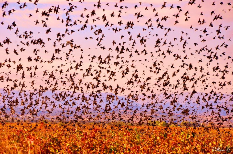 Je sais bien que les oiseaux perdus ...