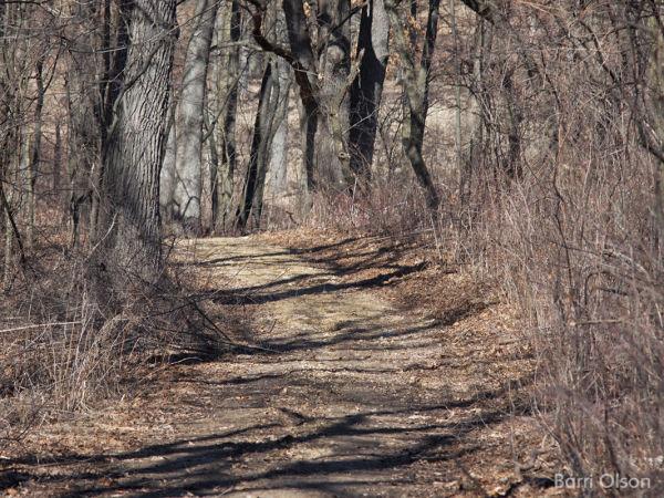 Path Through the Wood