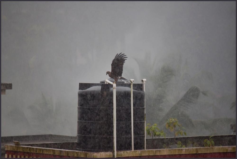 first rains
