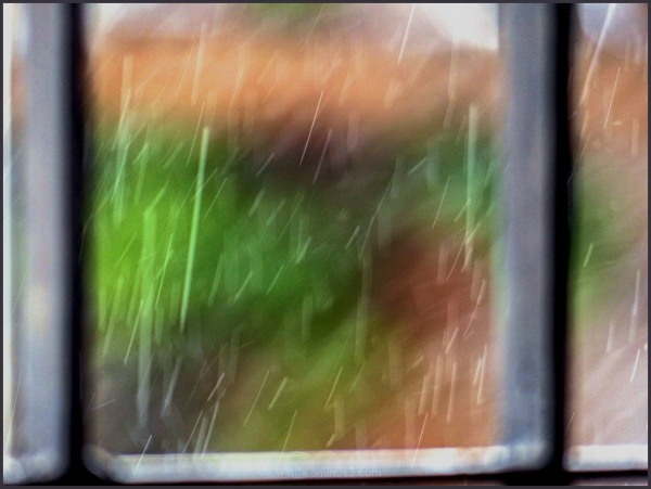 colors of rain on my window pane