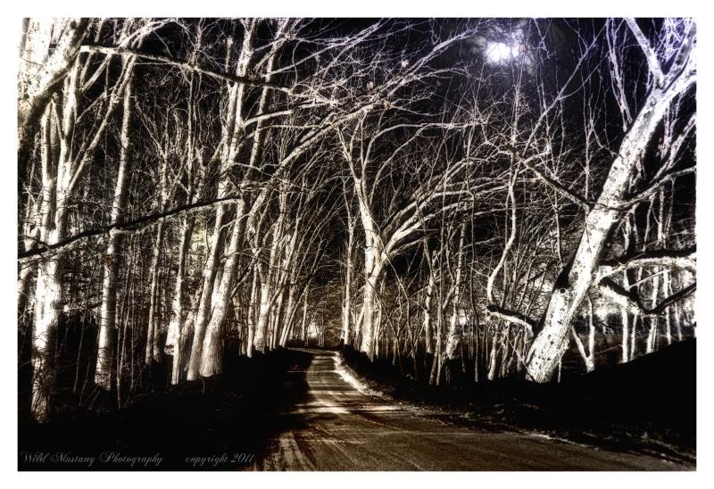 trees  moon  road
