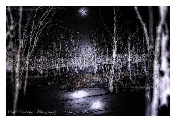 trees  moon    swamp