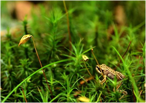 La petite grenouille.